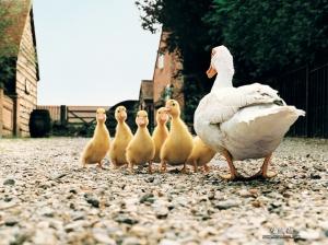 Farm-Animals-Collection-domestic-animals-5356758-1024-768